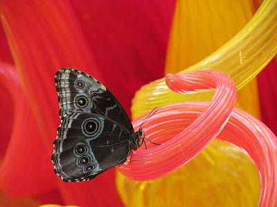 Chihuly Butterfly Poster by Kathleen Howard