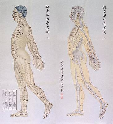 Chinese Chart Of Acupuncture Points Poster by Everett