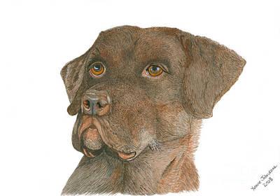 Chocolate Labrador Poster by Yvonne Johnstone