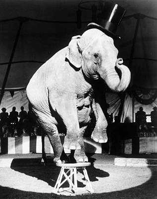 Circus Elephant, 1962 Poster by Granger