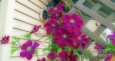 Clematis Jackmanii Poster by Kay Novy