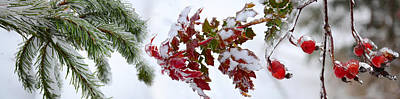 Close-up Of Frost On Plants Poster by Panoramic Images