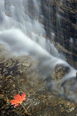 Closeup Maple Leaf And Decew Falls, St Poster by Darwin Wiggett