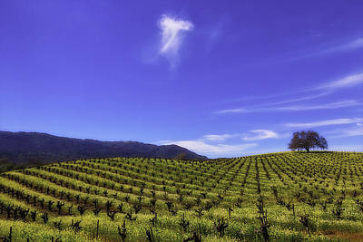 Cloud Above The Vineyards Poster by Garry Gay