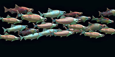 Coho Migration Poster by Jeff Burgess