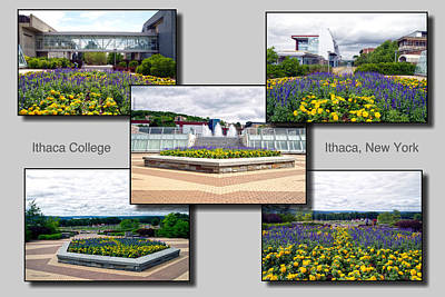 Collage Ithaca College Ithaca New York Floral Poster by Thomas Woolworth