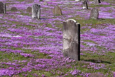 Colonial Tombstones Amidst Graveyard Phlox Poster by John Stephens