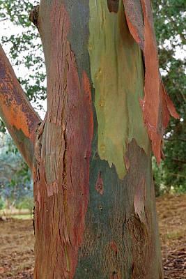 Colorful Eucalyptus Tree Bark 4 Poster by Gill Billington