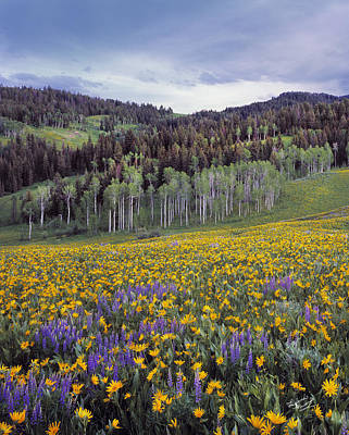 Colorful Spring Meadow Poster by Leland D Howard