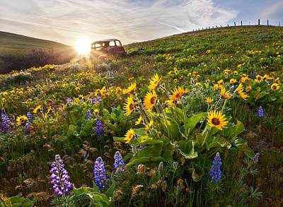 Columbia Hills Wildflowers Poster by Thorsten Scheuermann
