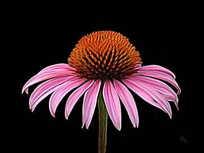 Cone Flower - Rudbeckia Poster by Sue  Brehant