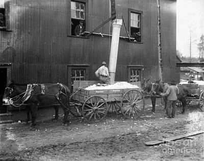 Cotton Ginning, 1902 Poster by Granger