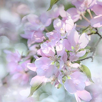 Crab Apple Blossoms Square Format Poster by Theresa Tahara