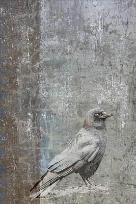 Crow In Grey Flannel Poster by Carol Leigh
