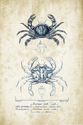Crustaceans - 1825 - 03 Poster by Aged Pixel