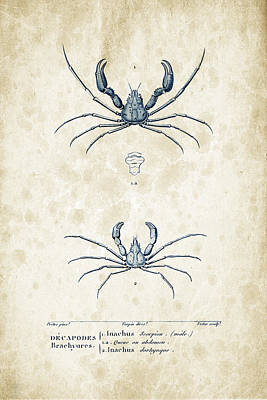 Crustaceans - 1825 - 22 Poster by Aged Pixel