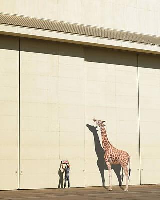 Curious Giraffe Poster by Richard Newstead