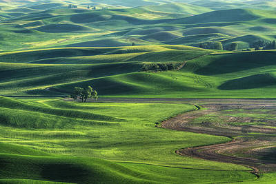 Curves Of The Palouse Poster by Mark Kiver
