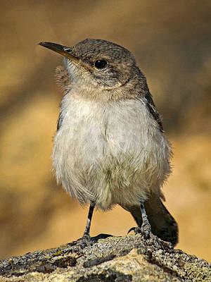 Cute Baby Bird By Jean Noren Poster by Jean Noren