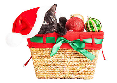 Cute Kitten In Christmas Basket Poster by Susan Schmitz