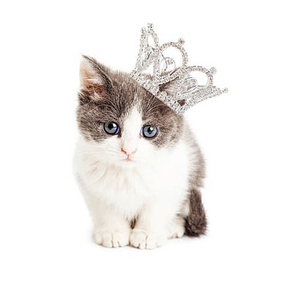 Cute Kitten Wearing Princess Crown Poster by Susan  Schmitz