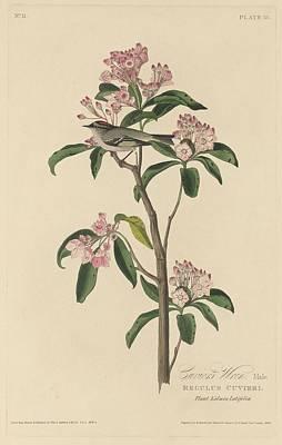 Cuvier's Wren Poster by John James Audubon