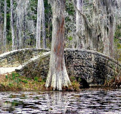 Cypress Swamp Stone Bridge Poster by Elena Tudor