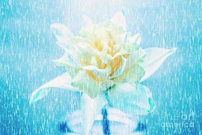 Daffodil Flower In Rain. Digital Art Poster by Jorgo Photography - Wall Art Gallery