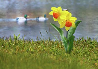 Daffodils Poster by Nina Bradica