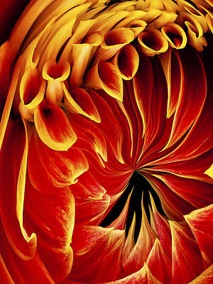 Dahlia Abstract By Jean Noren Poster by Jean Noren