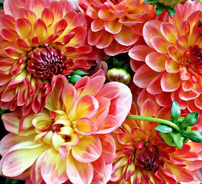 Dahlias Poster by Cathie Tyler