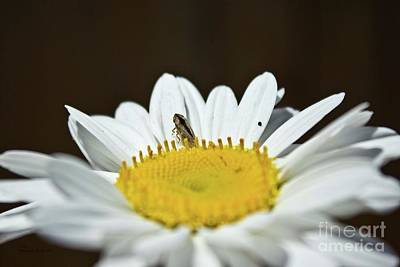 Daisy And Leafhopper Poster by Ms Judi
