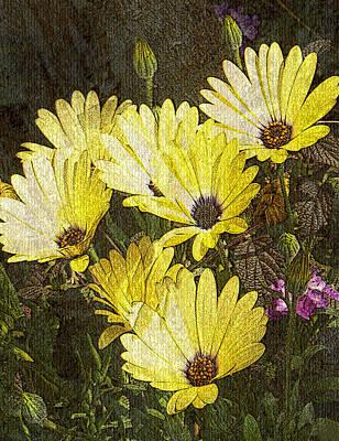 Daisy Daisy Poster by Tom Romeo