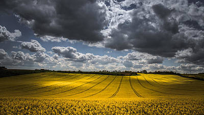 Dappled Sunlight On The Rapeseed Field Poster by Chris Fletcher
