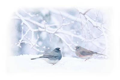 Dark-eyed-juncos In Snow Poster by Barbara Hymer