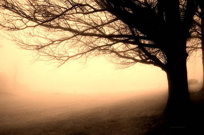 December Fog By The Sleepy Pin Oak Sepia Poster by Thomas Woolworth
