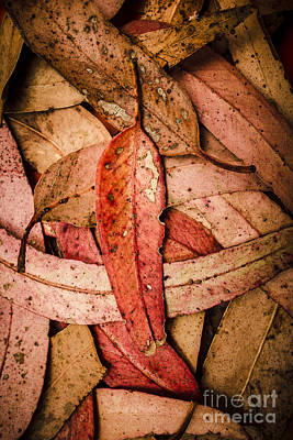 Decomposition In Fall Poster by Jorgo Photography - Wall Art Gallery