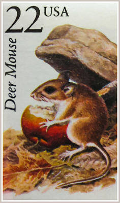 Deer Mouse Poster by Lanjee Chee