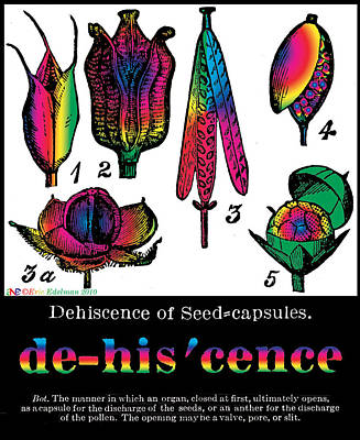 Dehiscence Poster by Eric Edelman