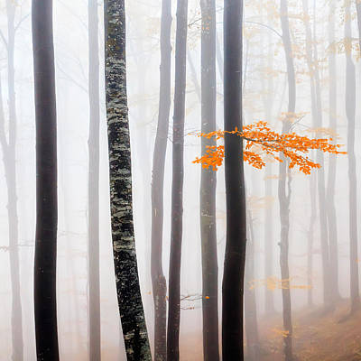 Delicate Forest Poster by Evgeni Dinev