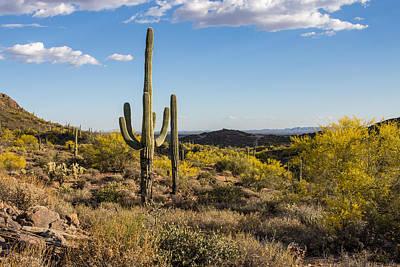 Desert Landscape Poster by Chuck Brown