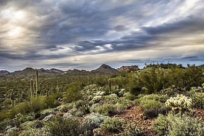Desert Skies Poster by Chuck Brown