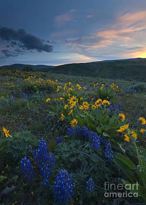 Desert Wildflower Sunset Poster by Mike Dawson
