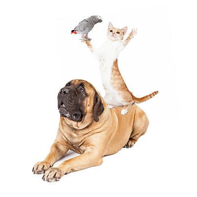 Dog Cat And Bird Playing Poster by Susan Schmitz