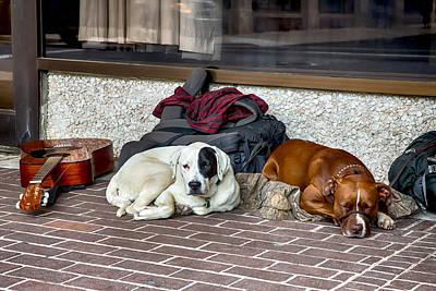 Doggone Buskers Poster by John Haldane