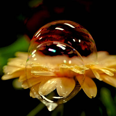 Double Bubble Flower Poster by David Patterson
