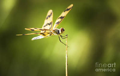 Dragonfly Clutching Fern Blade Poster by Jorgo Photography - Wall Art Gallery