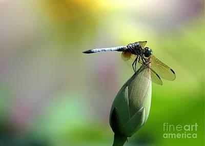 Dragonfly In Wonderland Poster by Sabrina L Ryan