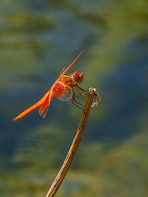 Dragonfly Profile Poster by Jean Noren