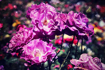 Dramatic Mauve Roses Poster by Carol Groenen